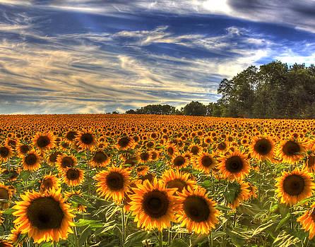 Sea of Sunflowers by Joe Paniccia