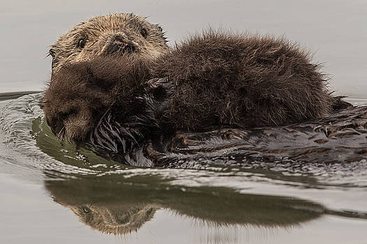 Sea Otter Mom and Pup by Don Baccus