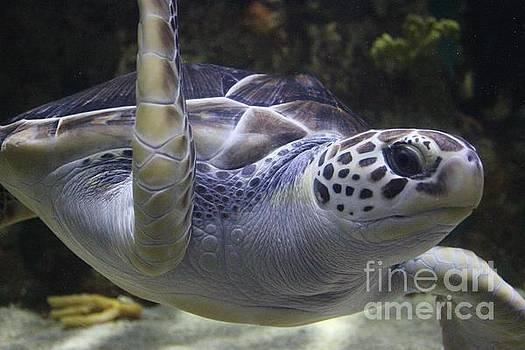 Sea Turtle Up Close by Paulette Thomas