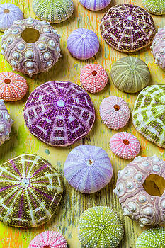 Sea Urchin Collection by Garry Gay