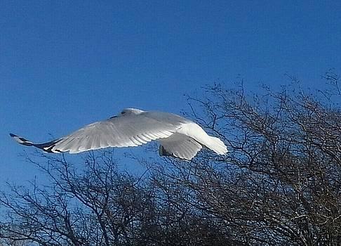 Seagull Profile Flight by Renee Antos