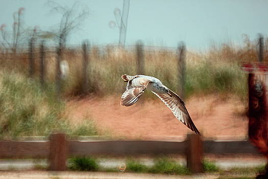 Seagull by William Cruz