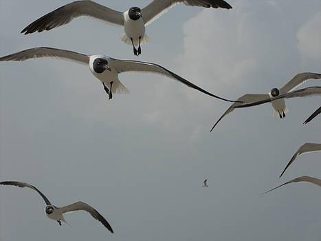 Seagulls - 1 by Randy Muir