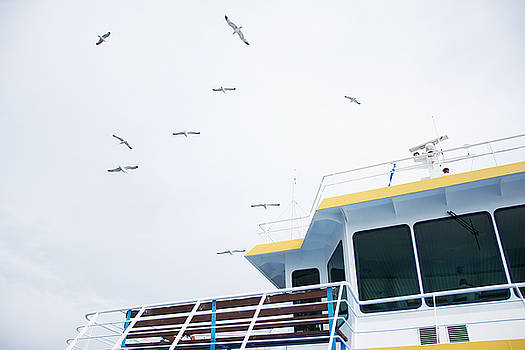 Newnow Photography By Vera Cepic - Seagulls over ferry boat