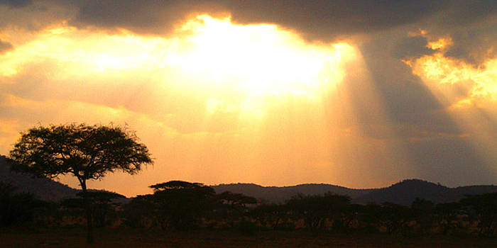 Serengeti Sunset by Pamela Kelly Phillips