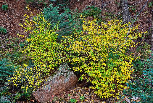 Robert Meyers-Lussier - Seven Falls Flora Study 11