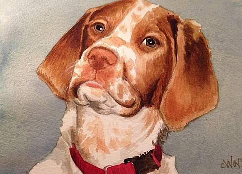 Shelby by Christine Winship