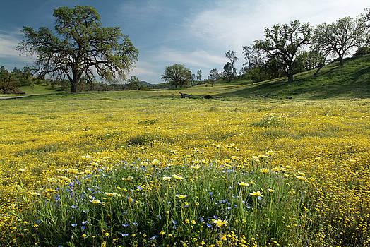 Shell Creek Wildflowers by Dean Hueber