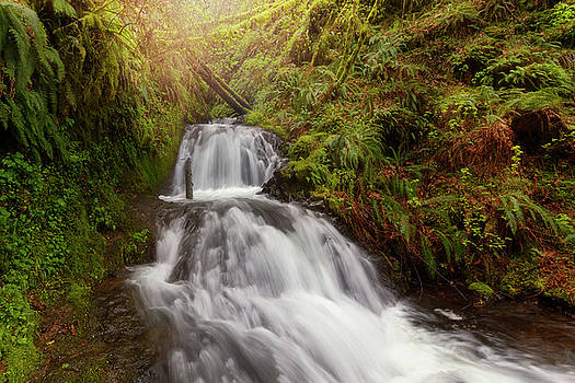 Shepperd's Dell Falls by David Gn