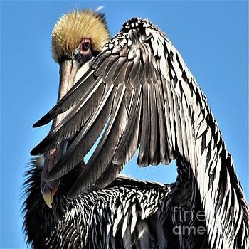 Shy Pelican by Paulette Thomas