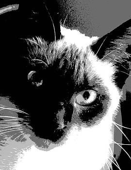 Siamese Cat  by Patricia Frankel