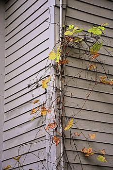 Robert Meyers-Lussier - Simply Autumn