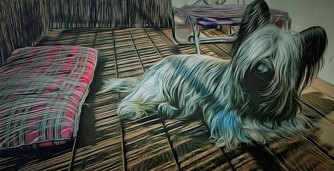 Skye Terrier by Janice MacLellan