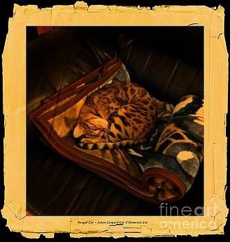 Sleeping Cat Digital Painting by Barbara Griffin