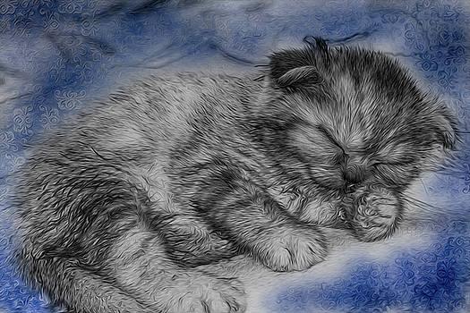 Sleeping Kitten by Tatiana Tyumeneva