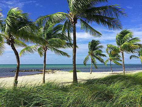 Smather's Beach Key West Florida by Kimberly Blom-Roemer