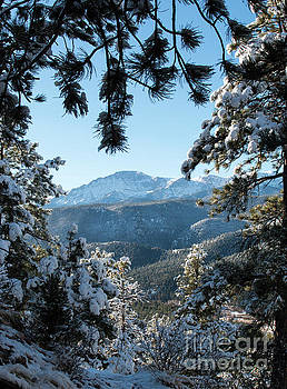 Steve Krull - Snow in the Pike National Forest