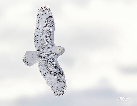 Snowy flyby by Don Anderson