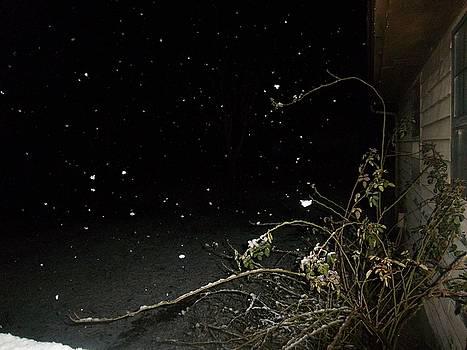 Snowy Night by Scarlett Stephenson