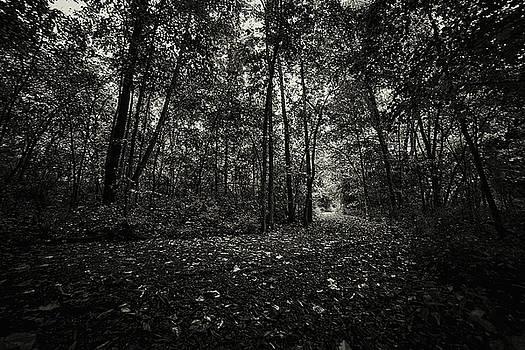 Solitude by CJ Schmit
