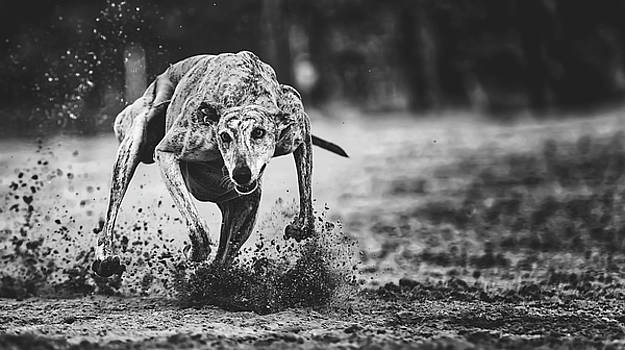 Speed To Burn by Pixabay