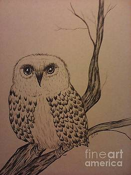 Spotted Owl by Ginny Youngblood