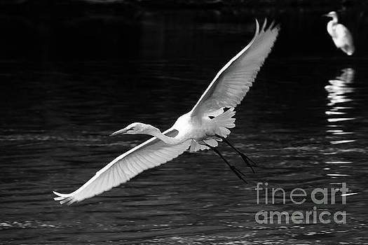 Spread Your Wings by Anita Oakley