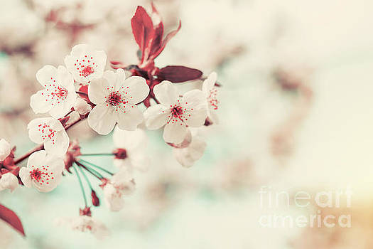 Spring background art with white cherry blossom by Victoria Kondysenko