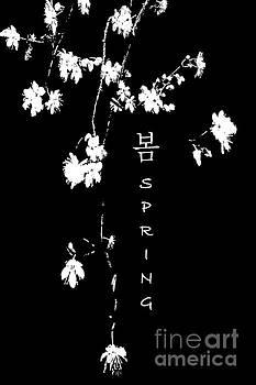 Spring blossoms by Wonju Hulse