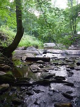 Spring Creeks by Meika Quinn