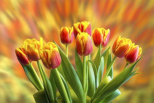 Spring flowers by Veikko Suikkanen