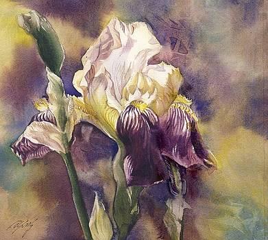 Alfred Ng - spring iris