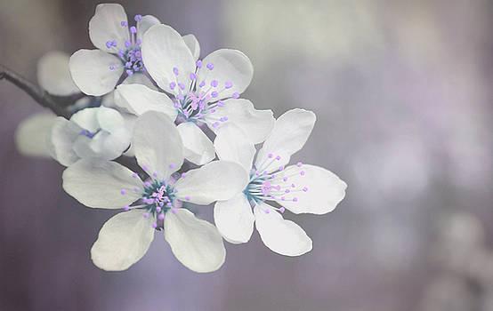 Spring tenderness by Rumiana Nikolova