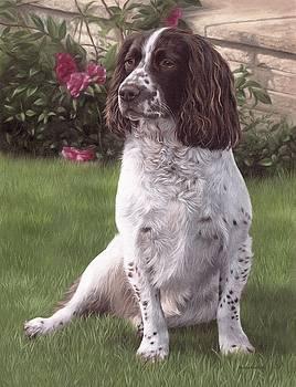 Springer Spaniel Painting by Rachel Stribbling