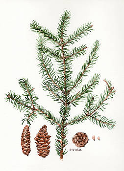 Spruce Twig by Betsy Gray Bell
