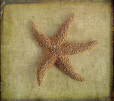 Starfish by Cindi Ressler