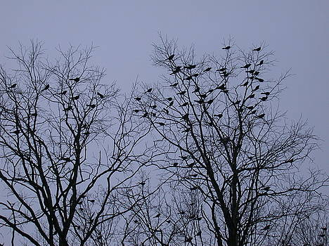 Starlings by Aggy Duveen