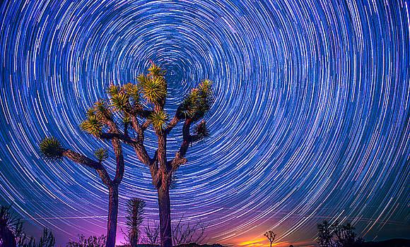Stars over Joshua Tree by Ryan D McKee