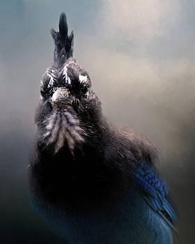 Steller's Jay by Lana Trussell