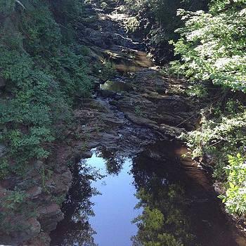 Stream In Woods by Amanda Richter