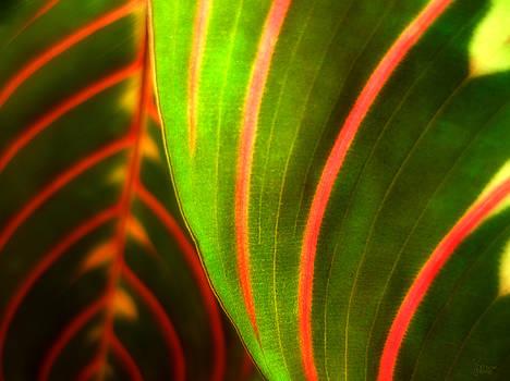 Stripes by Jeff Breiman