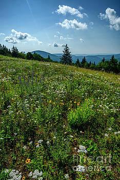 Summer Flowers Highland Scenic Highway by Thomas R Fletcher