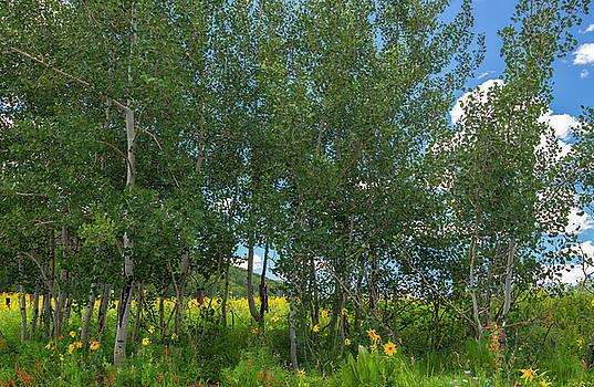 Summer Wildflowers by Tim Reaves