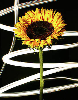 Sunflower by Bruce Bradley