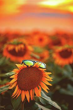 Sunflower by Chris Thodd