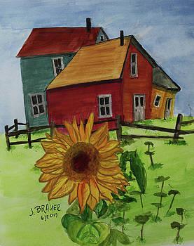 Sunflower by Jack G Brauer