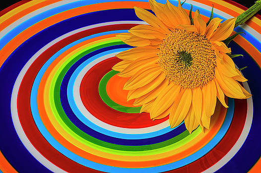 Sunflower On Circle Plate by Garry Gay