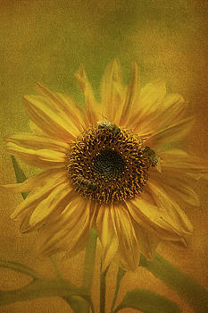 Sunflower by Susan Leonard
