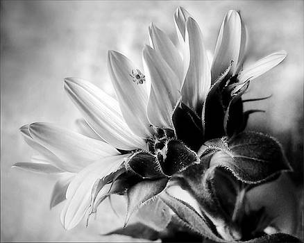 Louise Kumpf Artwork Collection Black White Flowers And Other
