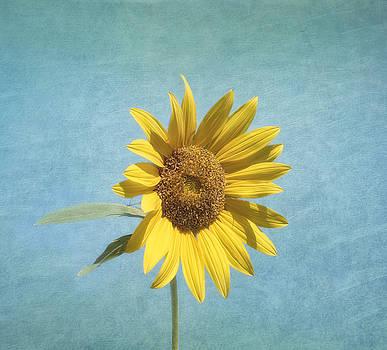 Kim Hojnacki - Sunny Side Up